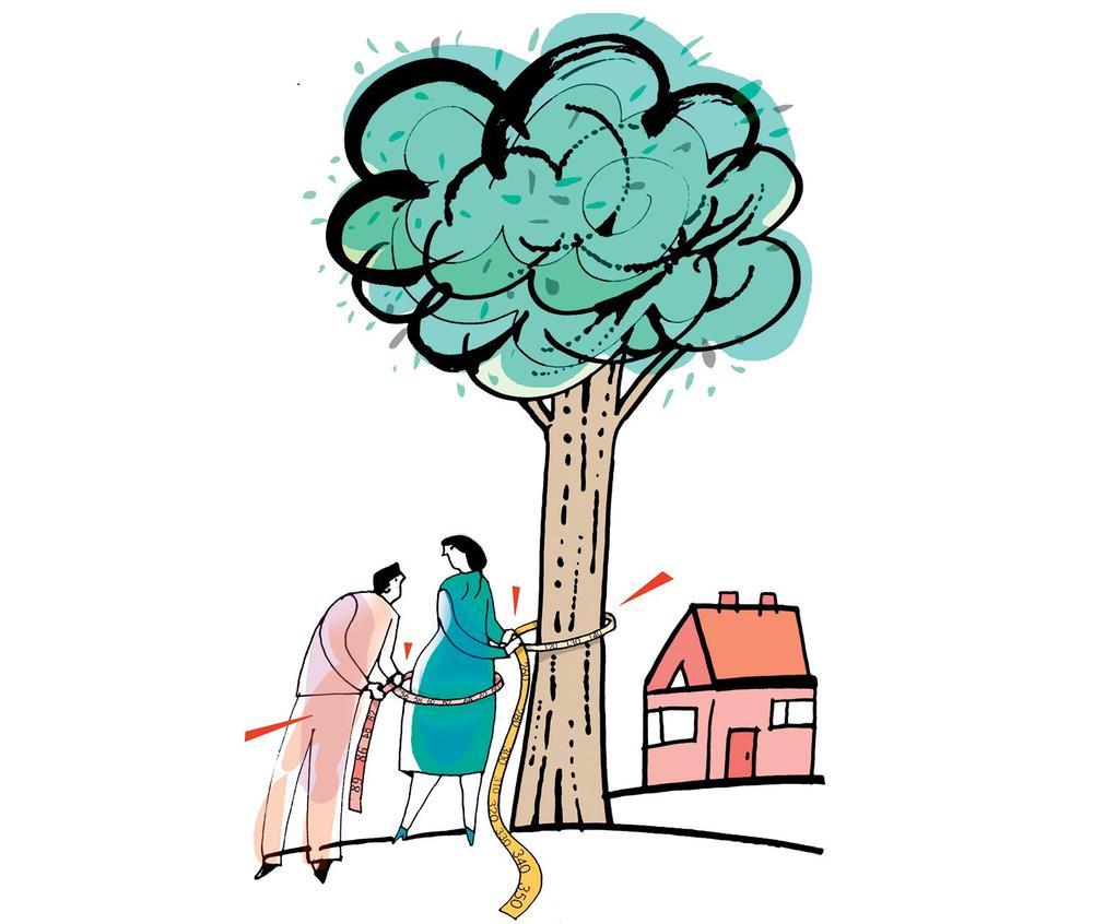 Wycinanie drzew na działce
