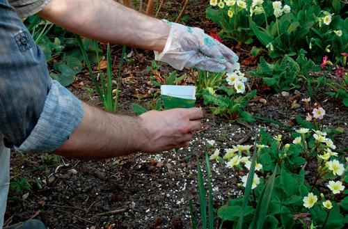 Czym nawozić rośliny