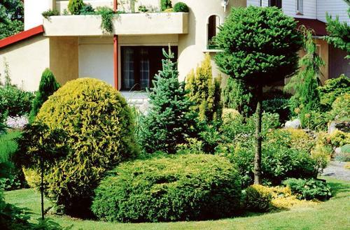 Ogród dla alergika