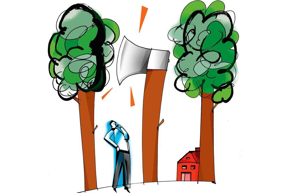Nowe opłaty za wycięcie drzew