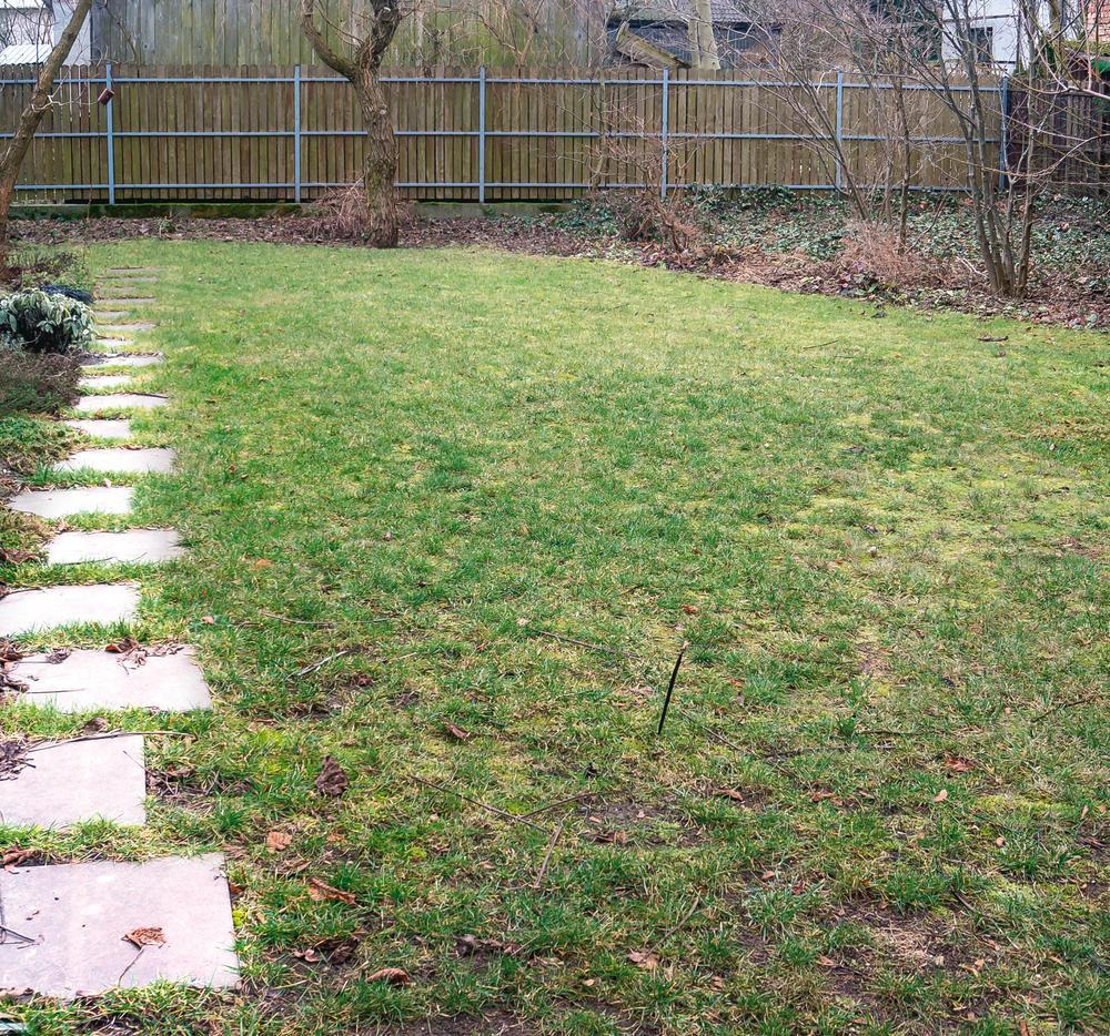 trawnik-po-zimie.jpeg