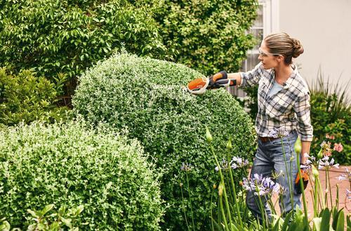 Cięcia w ogrodzie