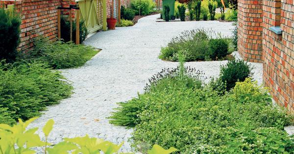 Ogrod Przed Domem Murator Pl