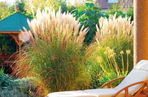 Ogród wokół tarasu