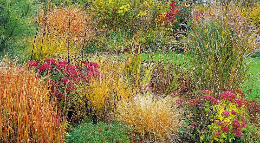 Ogród ozdobnych traw