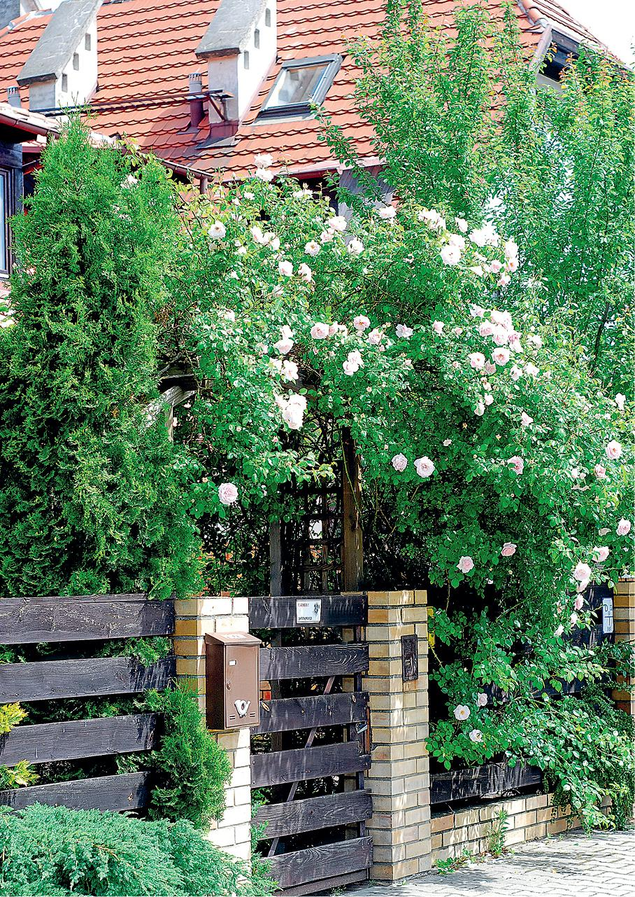 Ogrodzenia i pnącza