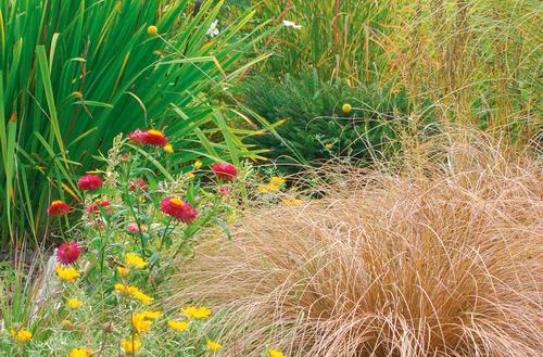 Niezawodne trawy