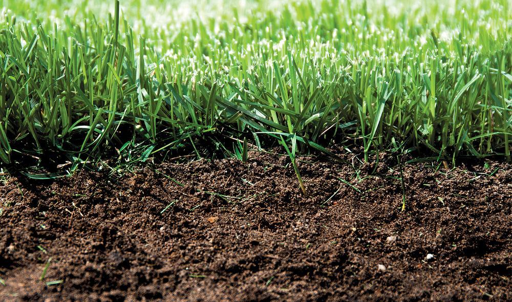 Jak poprawić jakość gleby